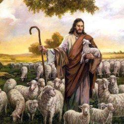 Bible sheep enamel lapel  pins
